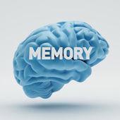 Memory Brain — Stock Photo