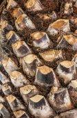 Palm tree bark texture — Stock Photo