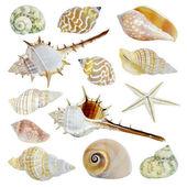 Sea Shells-Auflistung — Stockfoto