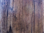 Old wooden bark in nature — Stock Photo