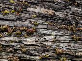 Moss on wooden bark in nature — Stock fotografie