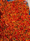 Backgrounds of red dried chilli in sunlight — ストック写真