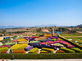 Beautiful garden of colorful flowers in summer on blue sky - Tha — Stockfoto