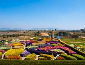 Hermoso jardín de flores coloridas en verano en el cielo azul - tha — Foto de Stock