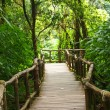 Wood path way in the forest in Doi Inthanon in Chiang Mai, Thailand — Stock Photo #54393427