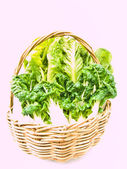 Fresh  baby bok choy and cos salad in ratten basket isolated on  — 图库照片