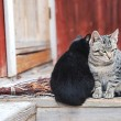 Gray stripes and black kitten outdoor on a cold autumn day — Foto Stock #57787633