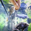 Hand Feeding Fish — Stock Photo #60640273