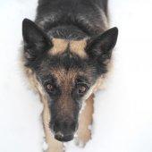 Dog in Alert — Stock Photo