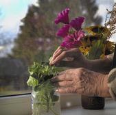 Flowers On A Window — Stock Photo