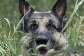 Köpek av — Stok fotoğraf