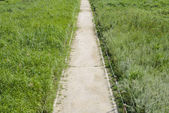 Lined straight path in a silver grass field — Stock Photo