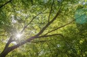 Branches with sunshine — Stock Photo
