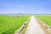 Landscape of green barley field and horizon — Stock Photo