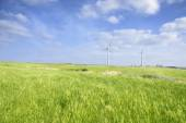 Landscape of green barley field and wind generato — Stock Photo