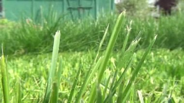 Lawn Mower, Grass Cutter, Landscaping — Stock Video