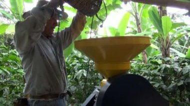 Coffee Farmer, Worker, Plantation, Nature — Stock Video