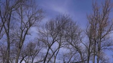 Tree Branches, Leaves, Nature — Stockvideo