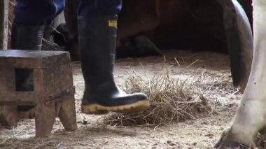 Manure, Poop, Fertilizer — Stock Video