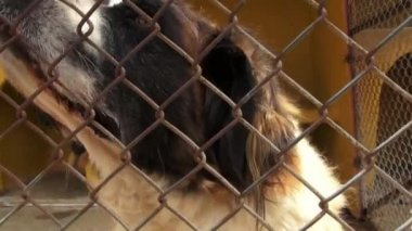 Lonely Caged Dogs, Canines, Neglect, Abuse — Stock Video