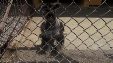 Caged Dogs, Barking, Canines, Neglect, Abuse — Stock Video