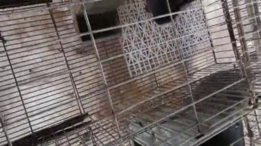 Caged Rabbits, Bunny, Hare — Stock Video