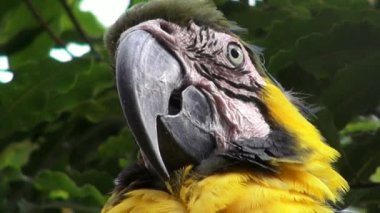 Parrots, Birds, Animals, Wildlife, Nature — Vídeo de stock