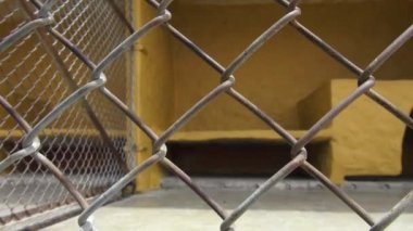 Anxious Caged Dogs, Canines, Neglect, Abuse — Stock Video