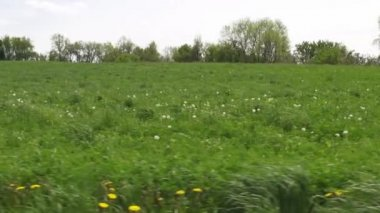 Fields, Plains, Meadows, Pastures, Landscapes — Stock Video