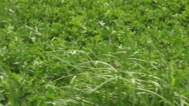 Grass, Lawns, Stems, Plant Life, Nature — Stock Video