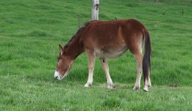 Horse Grazing, Horses, Farm Animals — Stock video