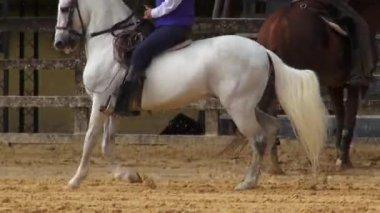Jazda konna, konie, zwierzęta — Wideo stockowe