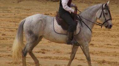 Horseback Riding, Horses, Animals — Stock Video