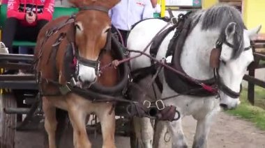 Horse Drawn Carriage, Wild West, Settlers — Stock Video