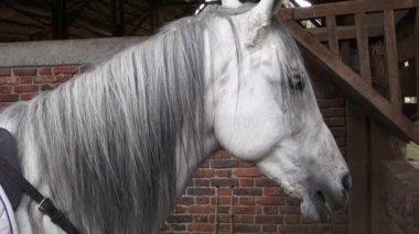 Horse, Head, Farm Animals, Wildlife — Stock Video