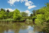 Central Park pond and bridge — Stock Photo