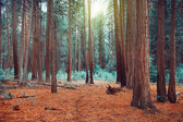 Magical dreamy forest — Stockfoto
