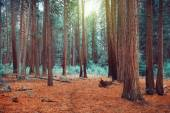 Magical dreamy forest — Stock Photo