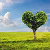 Heart shape tree — Stock Photo