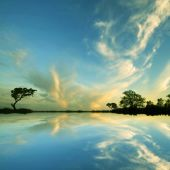 Trees and  sky  reflection  in water — Stock Photo