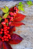Autumn leaves and berries — Stock Photo