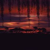 Trees silhouettes over sunset — Stock Photo