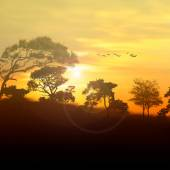 Beautiful landscape with birds — Stock Photo
