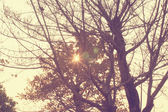 Evening Sunray with a retro vintage filter effect — Stock Photo