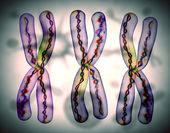 Chromosome x — Stock Photo