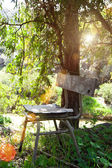 Old chair under a tree — Stock Photo