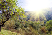 Landscape field, Casabermeja, Málaga — Stock Photo