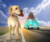 Abandoned dog on the road — Stock Photo