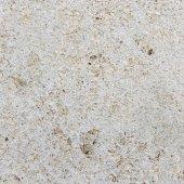 貝殻石灰岩のテクスチャ. — ストック写真
