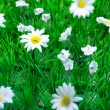 Plastic Grass and Flowers (2) — Stock Photo #51826121